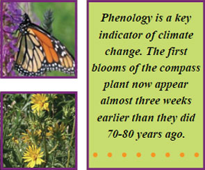 phenology-definition