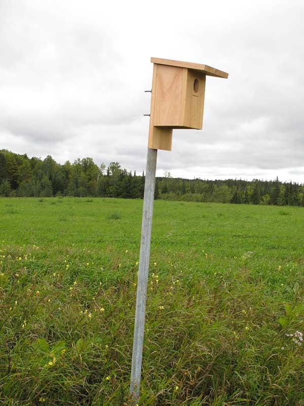 Bluebird Box 2