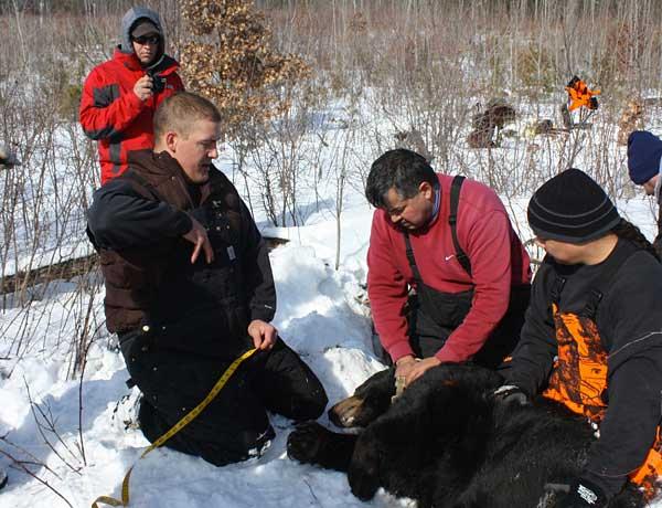 Mammal Bear 2