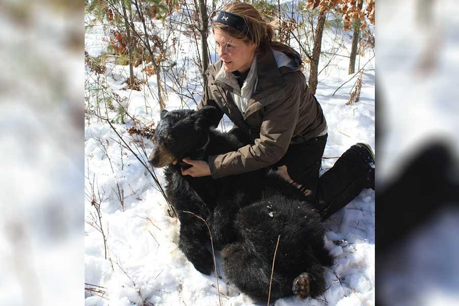 Mammal Bear 6