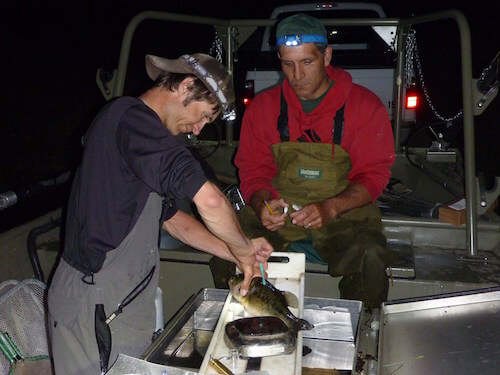 testing fish tissue