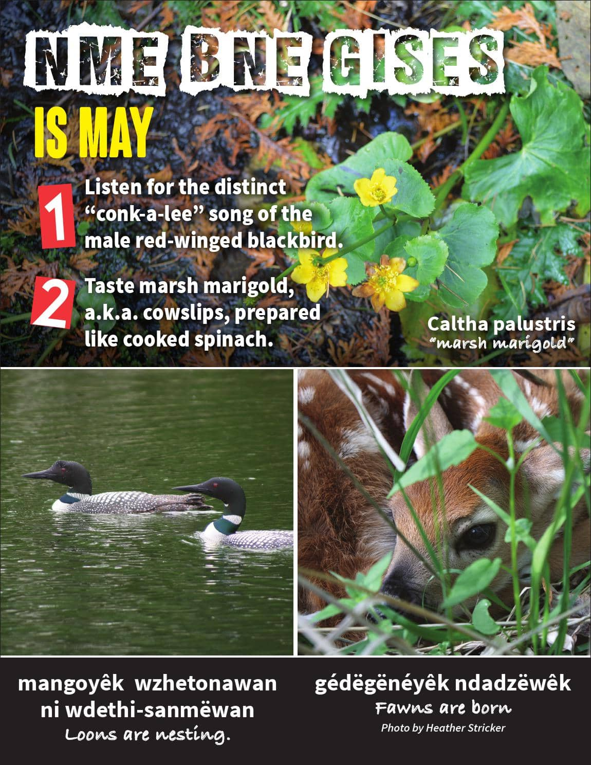 May Nature Flyer 2017